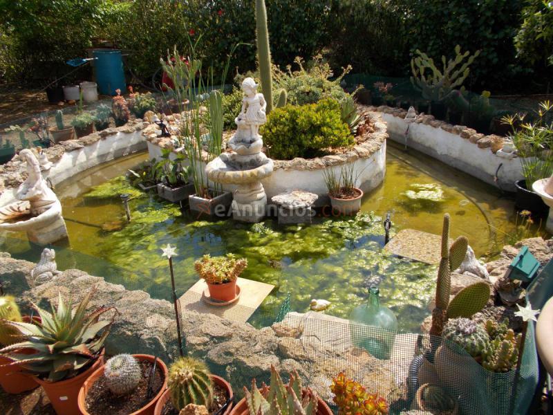 Adopcion de tortugas de agua y ranas 636135 for Estanque 2500 litros
